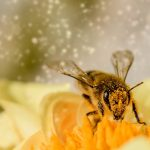 Picadura de insecto - Blog - Farmacia Pizarro